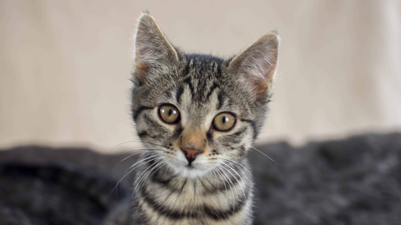 Pogoji za posedovanje domačih mačk